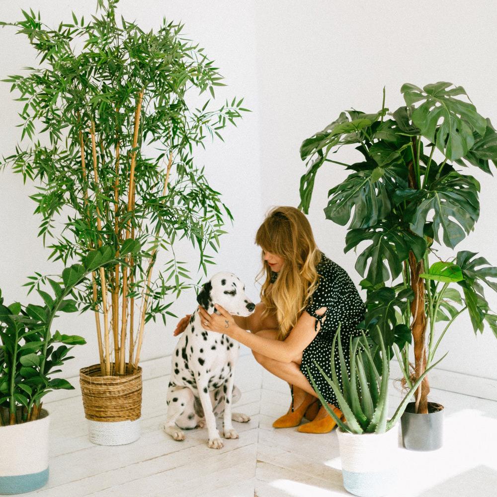 zwierzęta domowe a rośliny