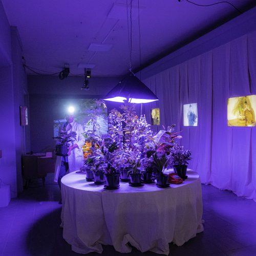 floraphilia-dokumentacja-wystawy-foto-monika-stolarska29